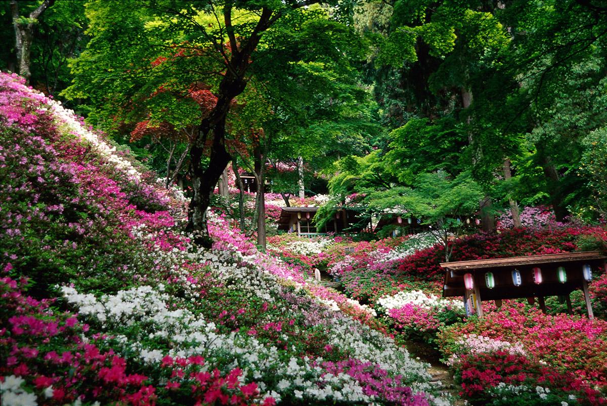다이코우젠지(大興善寺)